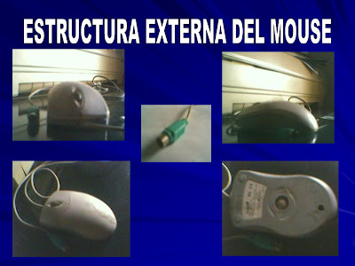 ESTRUCTURA+EXTERNA+DEL+MOUSE.bmp