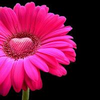 V Day Flower