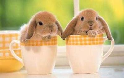 Willkommen auf meiner Seite über Kaninchen und Hasen.: fiscnatablog.blogspot.com