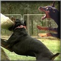 http://3.bp.blogspot.com/_gwiXbQ4HapM/RspdrOAW2EI/AAAAAAAAAJc/um0aOoqGty4/s400/dog_attack.jpg