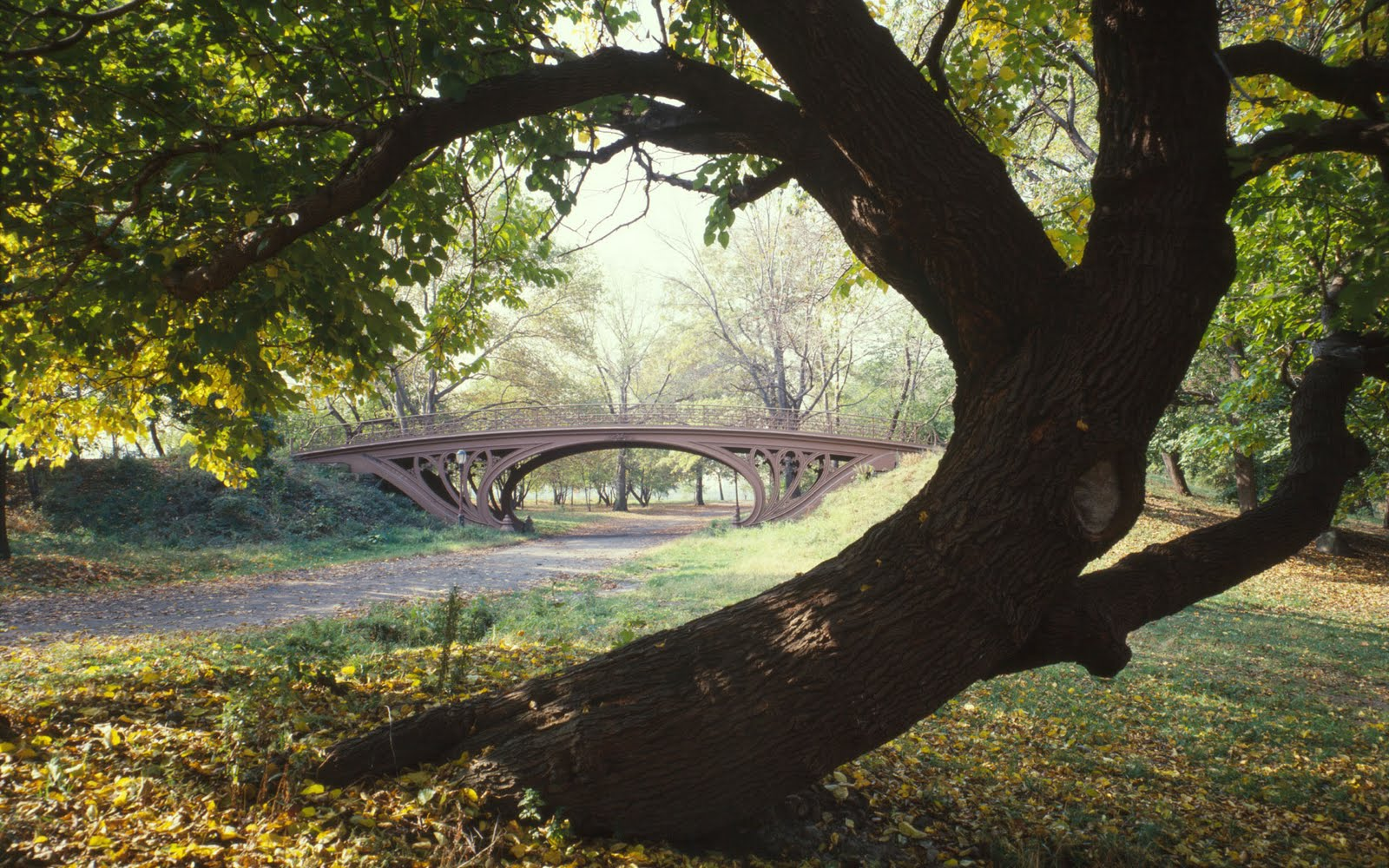 http://3.bp.blogspot.com/_gx7OZdt7Uhs/SwQrmBIQK1I/AAAAAAAAC5U/Vl3snbRYy7c/s1600/new+york+city+Free+Wallpaper.jpg