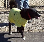 Dogs wear friends of the park shirts too!!