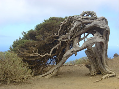 18 Foto Pohon Aneh di Dunia