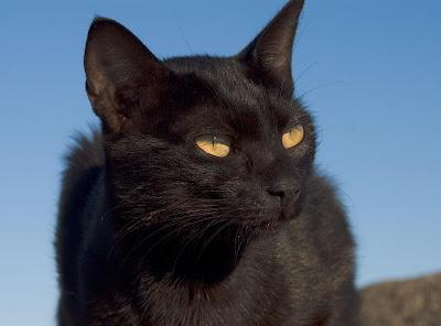 Czarny kot w piątek 13-go