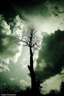 Միայնակ Ծառը