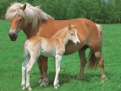 Aula de apoyo avance sin l mite la reproducci n for Pececillo nuevo de cualquier especie