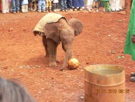 Elephant Orphanage #2