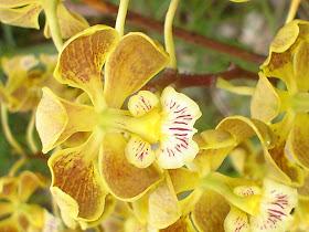 Orquídeas da região - Orquidário