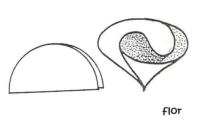 Molde flor de foami - Imagui