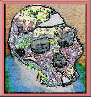 Australopithecus afarensis skull.