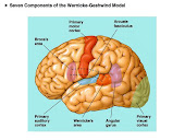 neuroanatomía cortical
