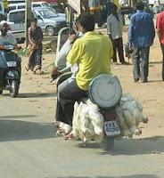 Перевозка куриц
