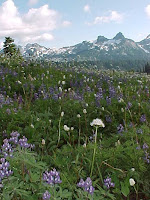 Mt Rainier meadow