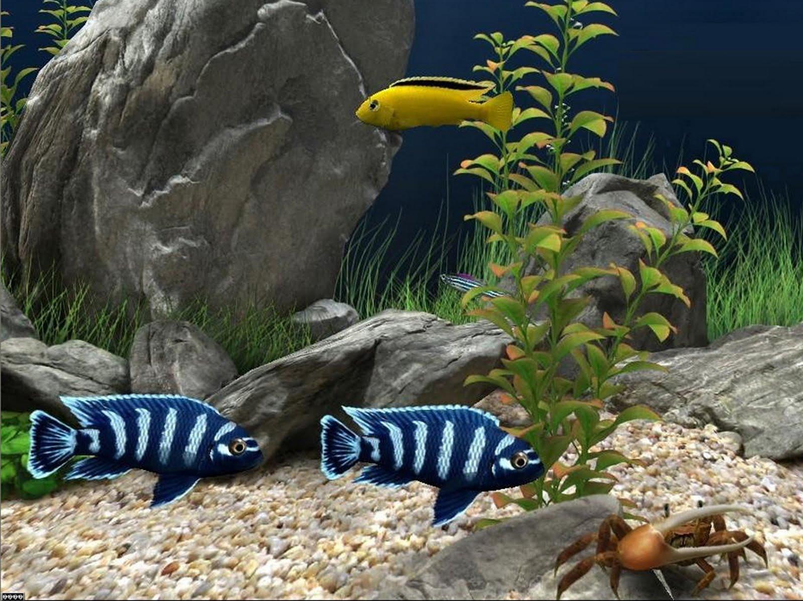 http://3.bp.blogspot.com/_h5fbT7fth-M/TLuQ8tg76RI/AAAAAAAAFl8/GUU5kAqFQek/s1600/Dream_Aquarium_Screensaver.jpg