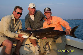 Bait Caught Cobia