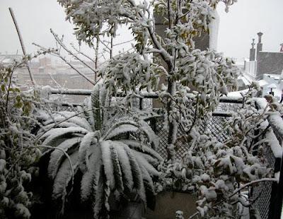 Nevada 8/3/2010