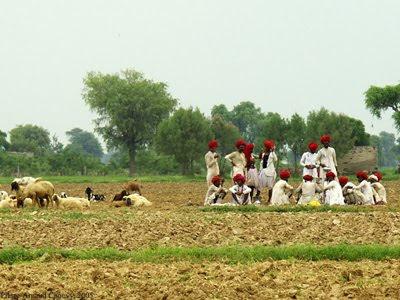 Pastores de Rajasthán