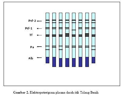 [itik+talang+benih+1.jpg]