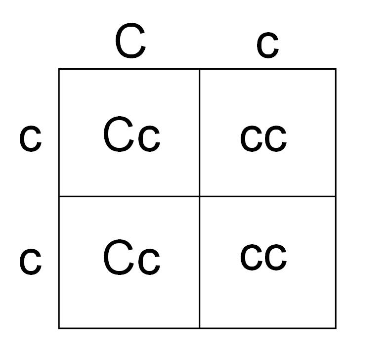 Color Blindness Punnett Square Pedegree And Punnett