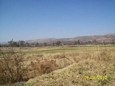 Widok z farmy