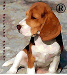 The Quilting Beagles®