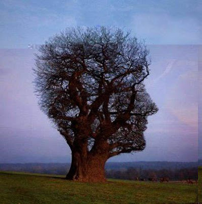 Human Face Like Tree