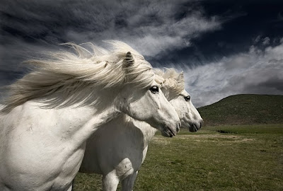 beautiful horses