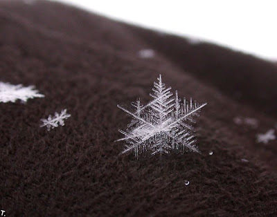 pictures of snowflake