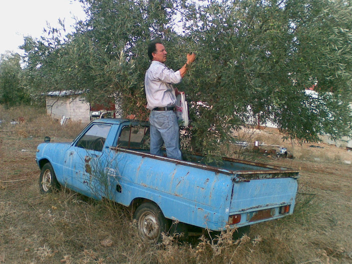 Ανθρωποι [ μαζευοντας ελιες , στο Γαλατα ] Μαχαιρα Ακαρνανιας
