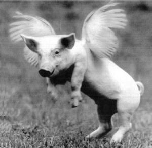 http://3.bp.blogspot.com/_hHERZ_LMGz0/S9yE4YdHWgI/AAAAAAAAFQU/PIj1lxbQRd8/s1600/flying_pig.jpg