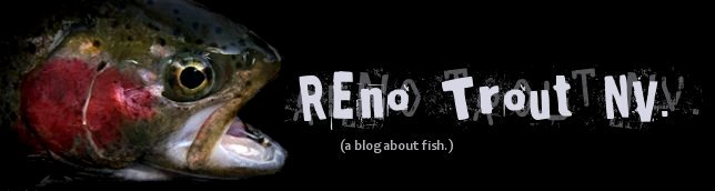 Reno Trout Envy
