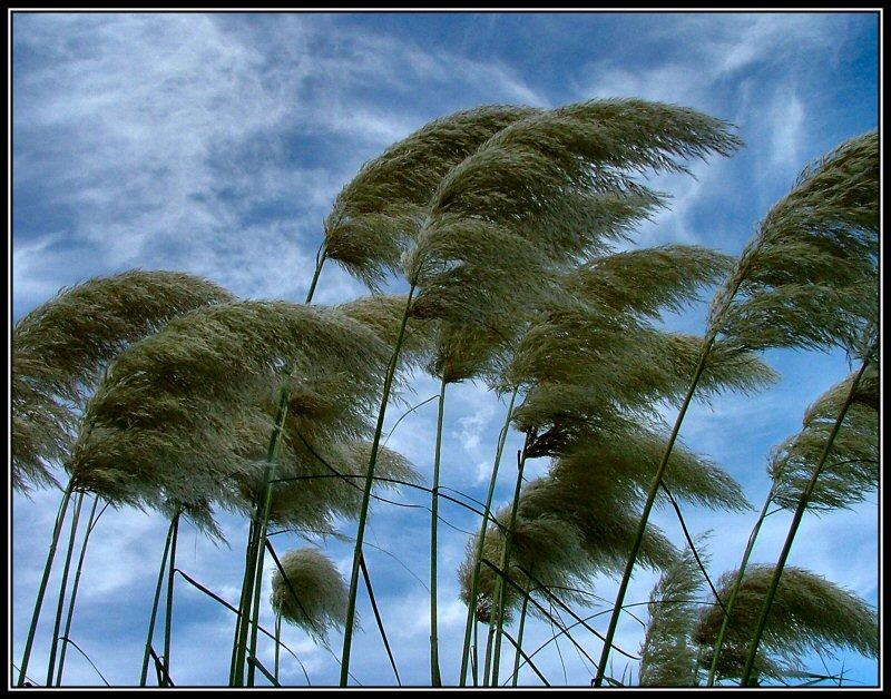 http://3.bp.blogspot.com/_hJbv3joz6bU/TLvjWhV2rpI/AAAAAAAABLs/x38MSn2j0BI/s1600/tree+wind.jpg