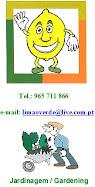 LIMÃO VERDE - 965711866