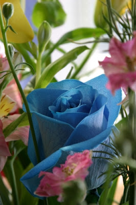 Heavenly blue rose in a garden of delights