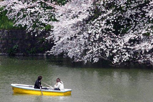 Visiter Okinawa Japon : Fond écran de cerisier en fleur et du Japon