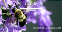 customize google homepage with photographs
