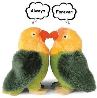 lovebird romance