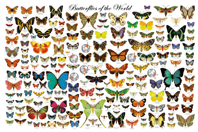 We are like butterflies who flutter for a day and think it is forever    Butterfly Species Names