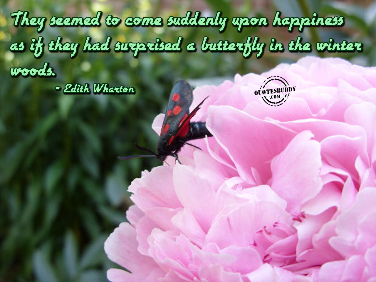 Friendship Quotes About Butterflies : Quotes with butterflies flowers quotesgram