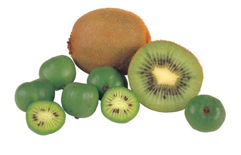 baby kiwifruit  frieda's inc.  the specialty produce company, Beautiful flower