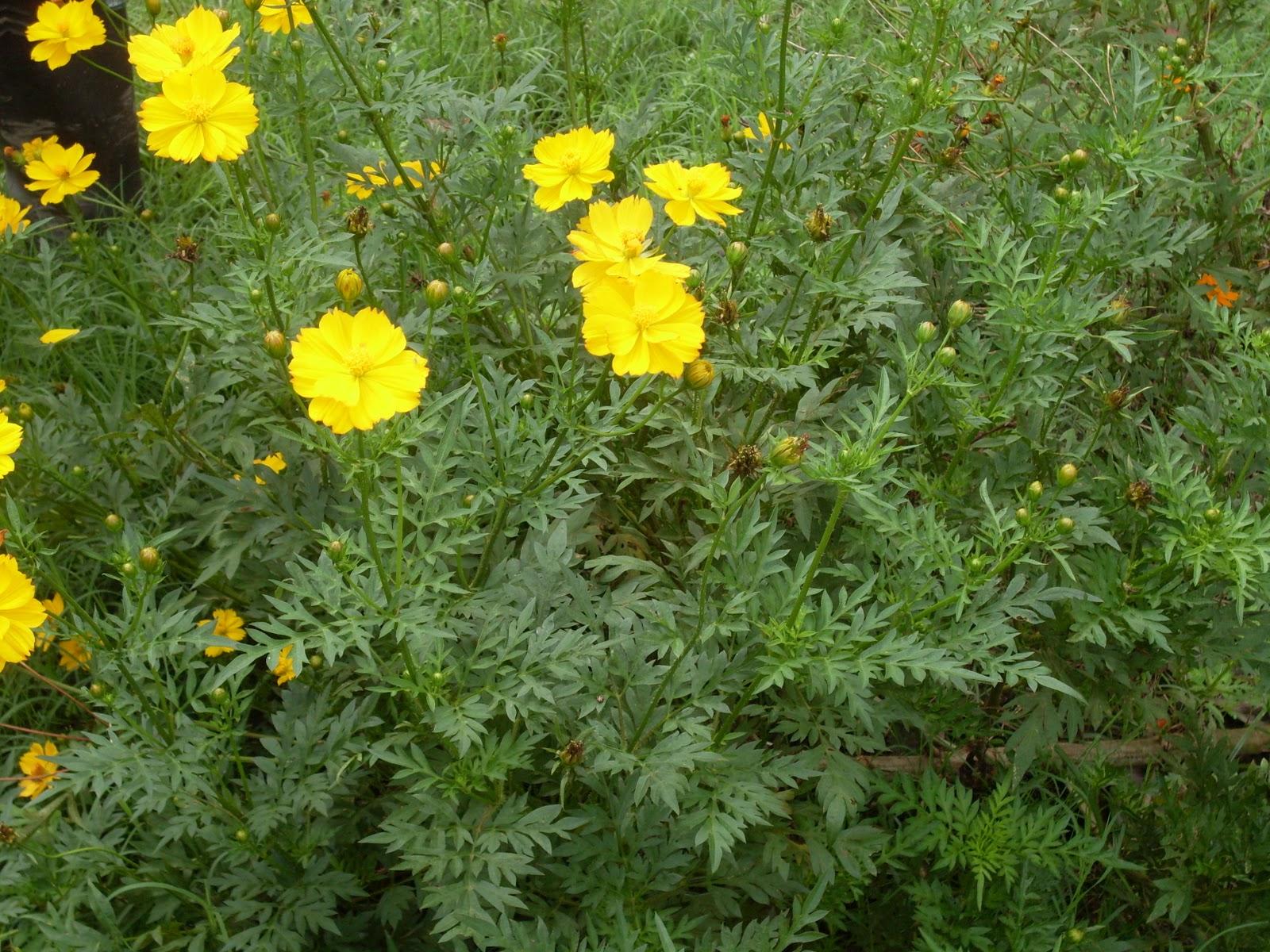 Cristianziege plantas ornamentales for 6 plantas ornamentales
