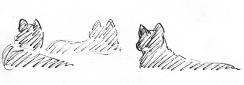 Meadow Vole Drawing