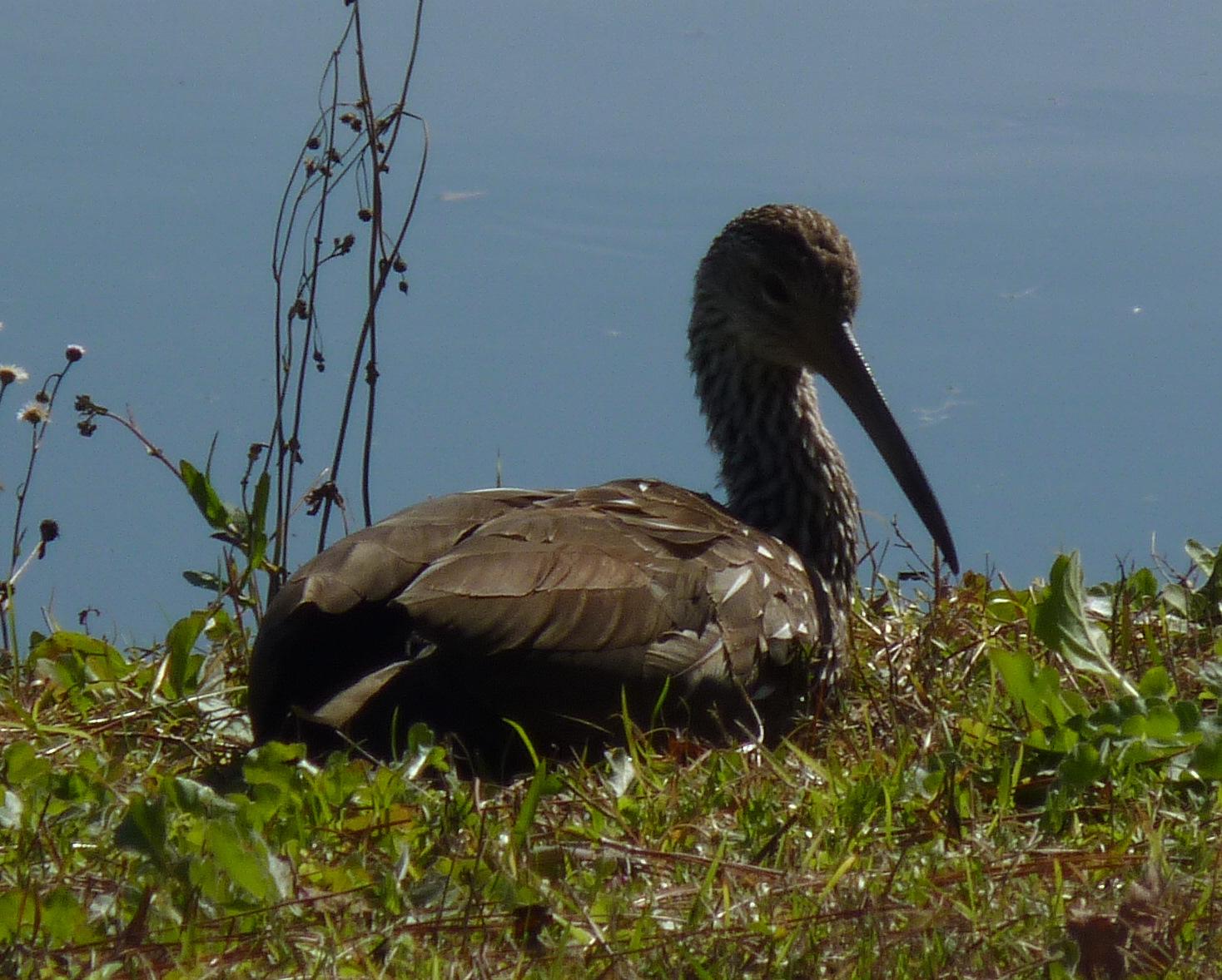 Southern Birds: Backyard Guide - Watching - Feeding Florida backyard birds pictures