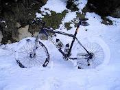 La burra de muntanya a la neu.