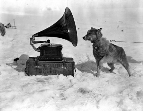 Arctic Dogs Rescue