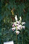 Soroa Flowers