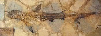 http://3.bp.blogspot.com/_hPx0xHiyIAY/TBo_EyY_48I/AAAAAAAAACc/Wwyrsfa0KD8/s1600/requin_primitif.jpg