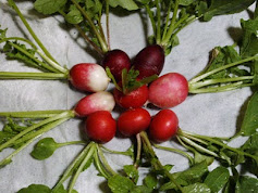 First Radishes