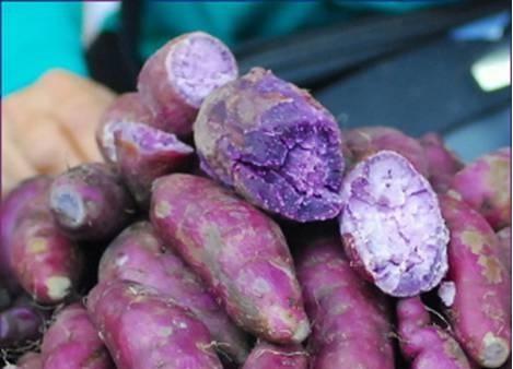 EMEL PILIHAN: Purple Sweet Potato