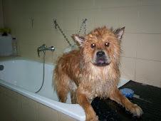Quien es este perro y que han hecho con mi Hommer?